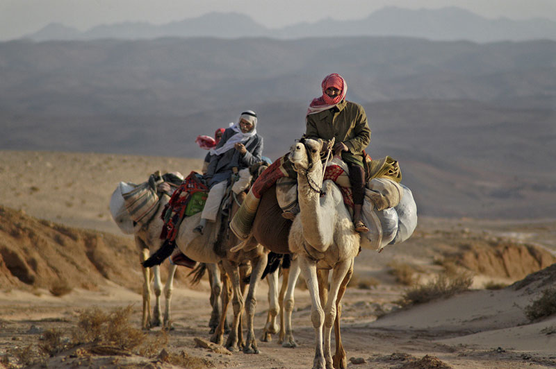 Jeep & camel tour in Sinai from Eilat