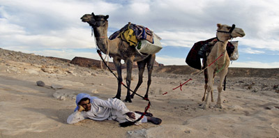 Camel tours in the Sinai desert