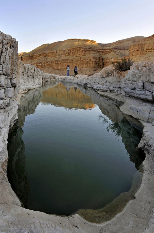 Rain pools in the Negev desert