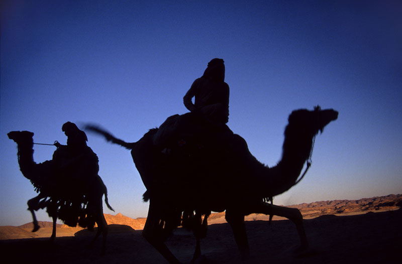 Camel tours in the Sinai desert Egypt