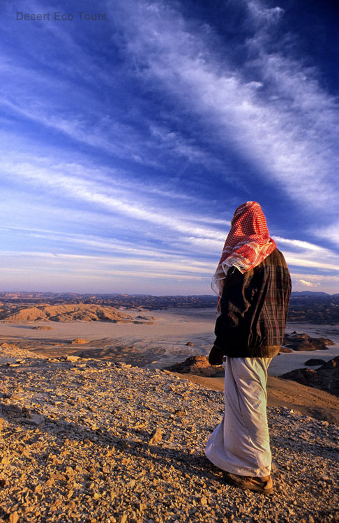 Jeep and camel tours in the Sinai