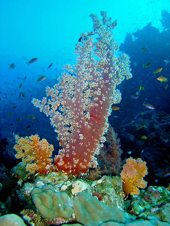 Israel Egypt tour: Red Sea snorkling