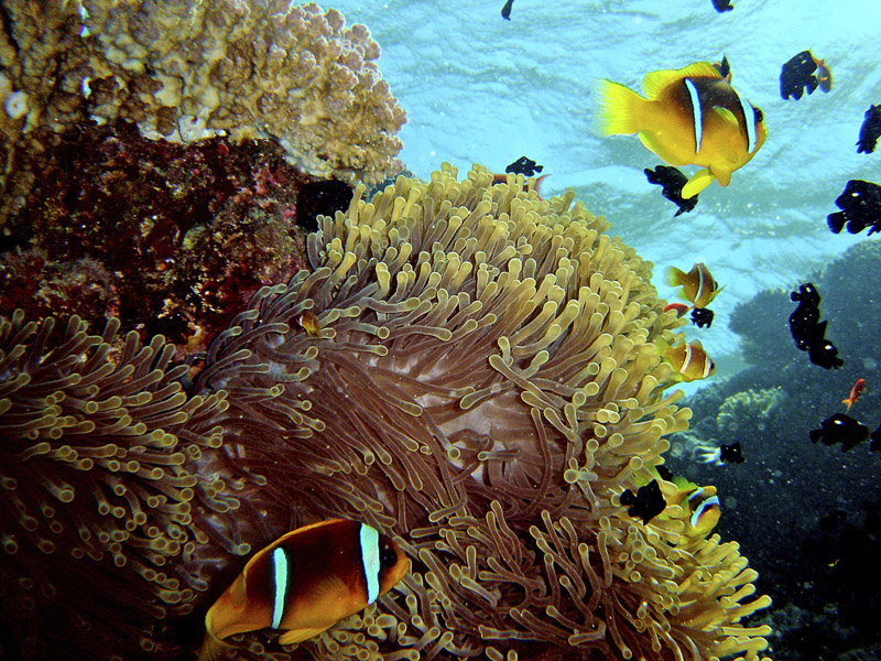 Diving & snorkling in the Red Sea