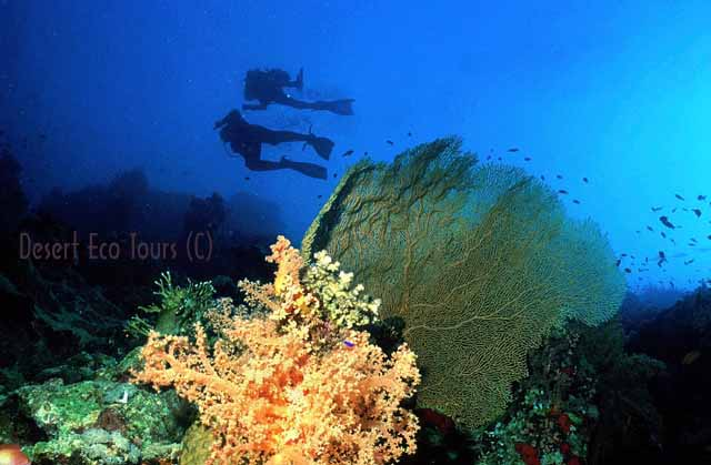 Diving in the Red Sea- Sinai Egypt