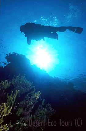 Diving in Sharm el Sheikh- Egypt