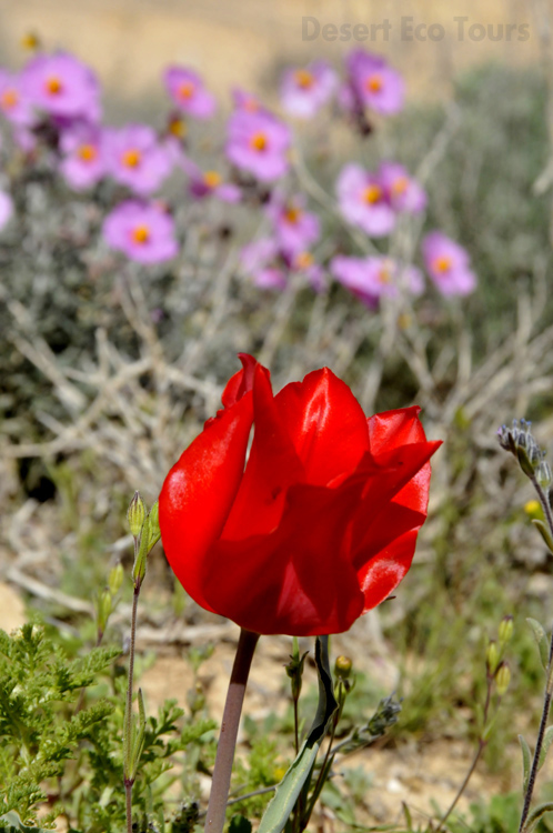 Spring in the Judean desert