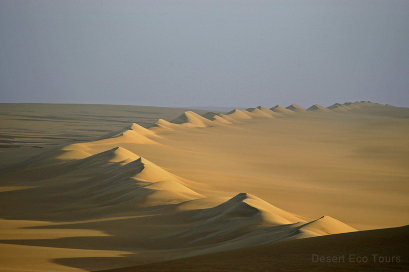 The Western desert of Egypt- The Great Sea of Sand