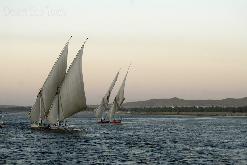 Faluka boats on the Nile